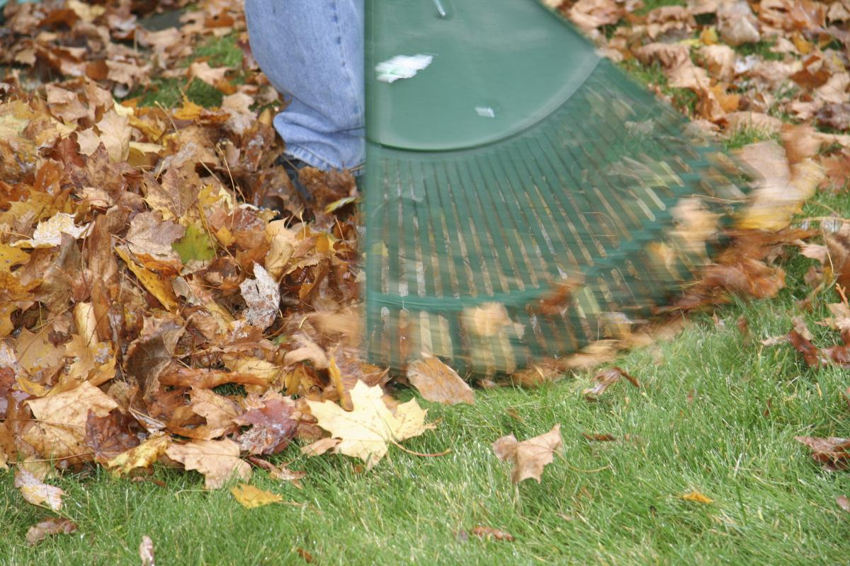Fall leaf removal tips