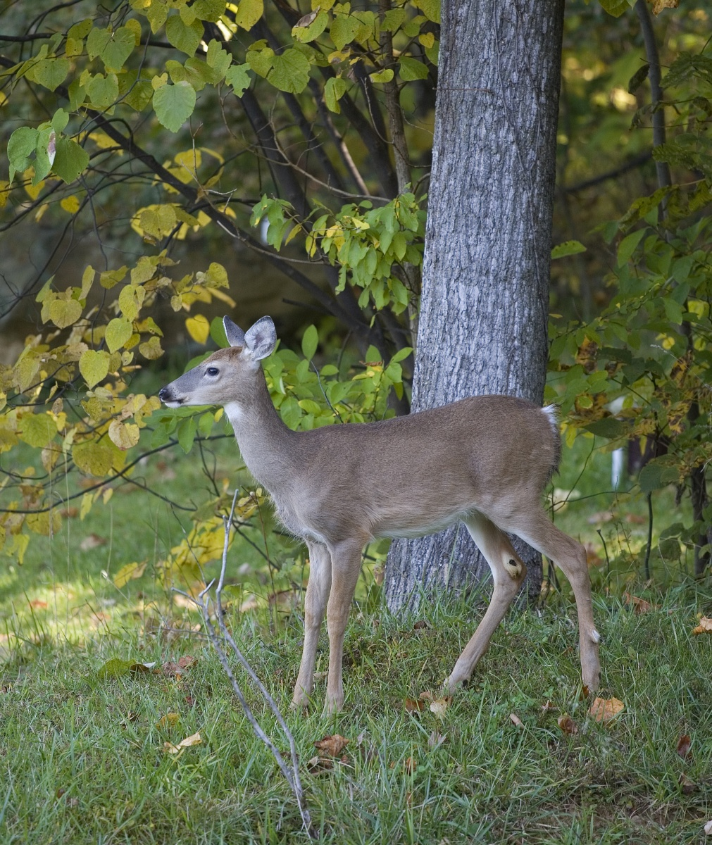 Level Green Landscaping can help you design a deer-resistant landscape plan.